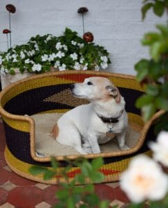 bolga pet baskets for your furry friends
